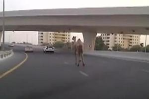 Τι μπορεί να δει κανείς σε αυτοκινητόδρομο του Ντουμπάι