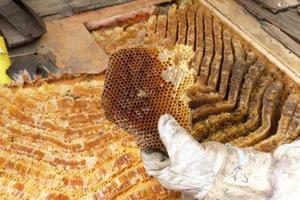 Συνελήφθη ο κλέφτης των μελισσών στον Πλατανιά