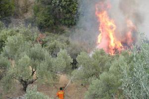 Τριάντα πεζοναύτες στη φωτιά του Αγίου Όρους