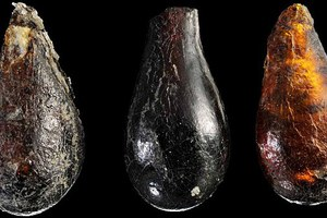 Ανακάλυψαν προϊστορικό πουλί παγιδευμένο μέσα σε κεχριμπάρι