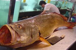 Έπιασε ψάρι αξίας 473.000 δολαρίων