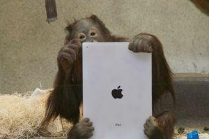Και οι πίθηκοι θέλουν το... application τους