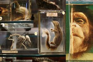 Τα ζώα «μπαίνουν» στο μουσείο