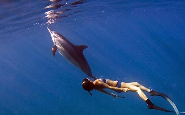 Αποτέλεσμα εικόνας για Βουτώντας με τα δελφίνια στο Αιγαίο