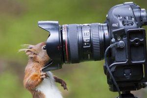 Θα έρθει επιτέλους κανείς για τη φωτογράφιση;