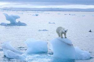 Δραματική η μείωση των πάγων της Αρκτικής