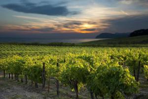 Το κρασί στο... κρασοσκόπιο