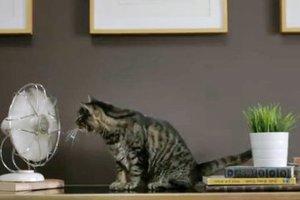 Μία γάτα με οικολογική συνείδηση