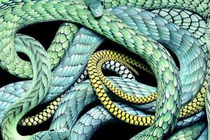 Νεκρές φύσεις με φίδια