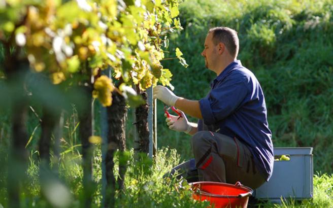 Με το ποσό των 9 εκατ. ευρώ ενισχύθηκαν 696 νέοι αγρότες