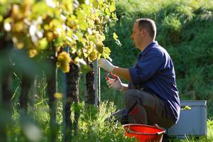 Επιδότηση της εποχικής εργασίας στον αγροτικό τομέα