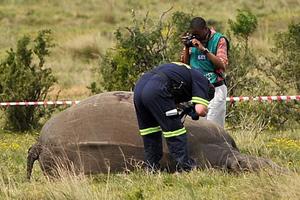 Νέο ρεκόρ στη λαθροθηρία ρινόκερων