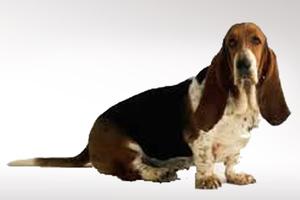 Σκύλος στην Ιταλία κληρονόμησε δύο εκατ. ευρώ