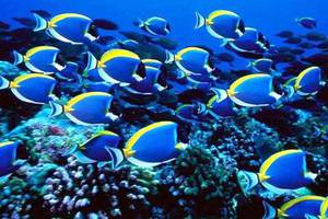 Επιστήμονες ανακάλυψαν γιατί συρρικνώνονται τα ψάρια