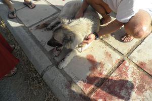 Έσερνε το σκύλο για να τον λιώσει