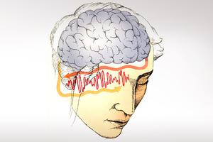 Το «ναρκωτικό» που τρελαίνει τον εγκέφαλο
