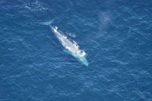 Μικρή φάλαινα ξεβράστηκε σε παραλία στην Κρήτη
