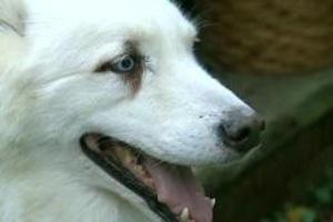 Ο σκύλος που το έσκασε από το σπίτι για να βρεθεί κοντά στον κύριό του