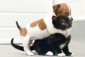 Κουτάβι και γατάκι πιστεύουν ότι είναι αδέρφια