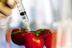 Τα οφέλη και οι συνέπειες των μεταλλαγμένων τροφίμων