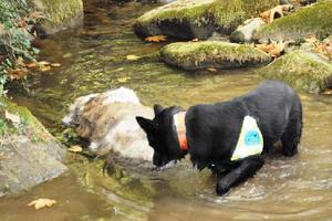 Ομάδα σκύλων ανιχνεύει φόλες στα Τρίκαλα