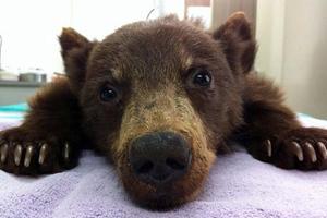 Ανθρώπινη φροντίδα για το αρκουδάκι