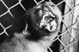 Την άνοιξη ο εμβολιασμός κατά της λύσσας