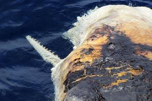 Νέες φωτογραφίες από την οικολογική τραγωδία στον Κόλπο του Μεξικού