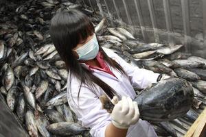 Ραδιενεργά για μια δεκαετία ακόμα τα ψάρια στη Φουκουσίμα