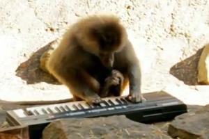 Οι μουσικοσυνθέτες της... πανίδας