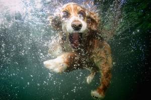 Επικίνδυνα για τους σκύλους τα φύκια στις θάλασσες