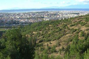 «Καμπανάκι» σε 39 δήμους για τους δασικούς χάρτες