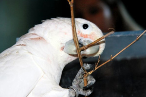 Ένας παπαγάλος με ξεχωριστές δυνατότητες