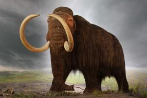 Επιστήμονες θέλουν να «αναστήσουν» μαμούθ