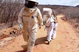 Ο πρώτος γάιδαρος-μελισσοκόμος