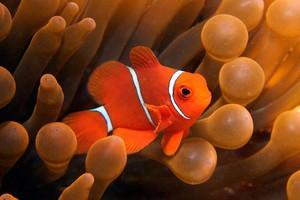 Ο μαγικός κόσμος του μεγάλου κοραλλιογενούς υφάλου