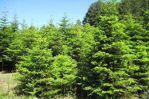 Δωρεά χριστουγεννιάτικων δέντρων στην Κατερίνη