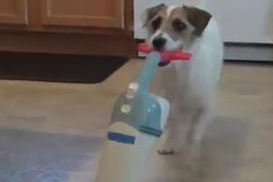 Ένας σκύλος για όλες τις δουλειές