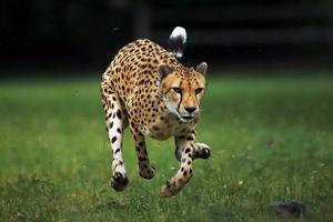Πώς ο άνθρωπος έχει επηρεάσει το πόσο κινούνται τα ζώα