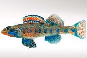 Ένα ψάρι που το λένε Ομπάμα!