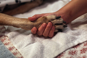 Τα σκυλιά στο πλευρό των ατόμων με ειδικές ανάγκες