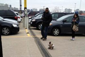 Μία μαϊμού πήγε για ψώνια