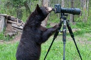 Αρκούδα με κλίση στη φωτογραφία