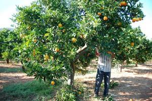 Δίνουν δουλειά σε άνεργους Ελληνες εργάτες γης