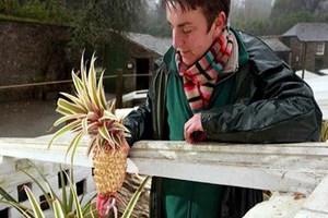 Ο πιο ακριβός ανανάς του κόσμου