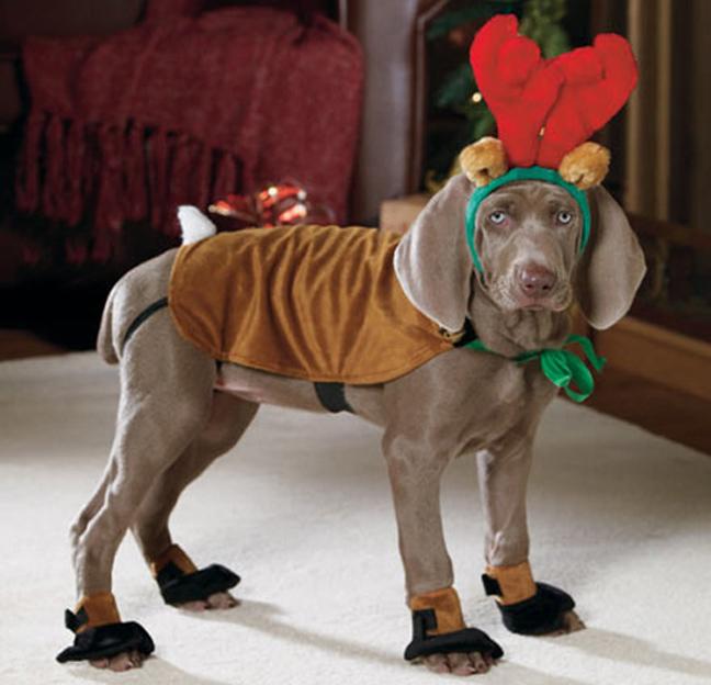 Костюм для собаки своими руками на новый год
