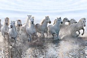 Νεκρά βρέθηκαν στο Πάιπγκο, άλογα που ζούσαν σε ημιάγρια κατάσταση