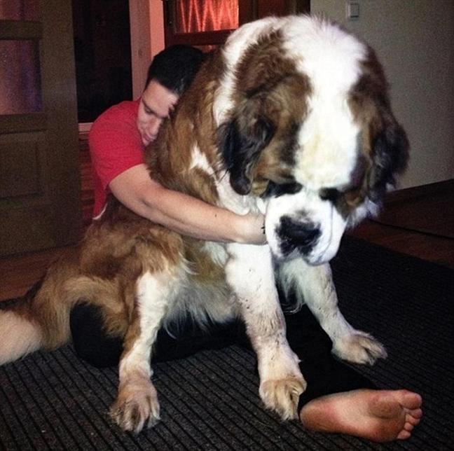 D0OG2 ΔΕΙΤΕ: Φωτογραφίες από τα μεγαλύτερα σκυλιά στο κόσμο!