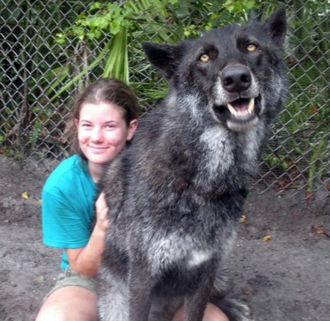 D0OG7 ΔΕΙΤΕ: Φωτογραφίες από τα μεγαλύτερα σκυλιά στο κόσμο!