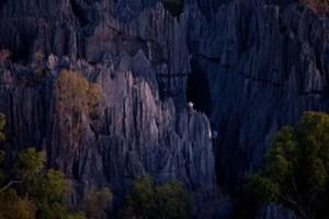 Το παραμυθένιο πέτρινο δάσος της Μαδαγασκάρης